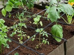 comment installer un potager en pot au balcon ou dans une cour