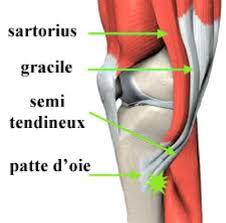 tendinite de la patte d oie genou douloureux