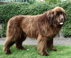 Non Shedding Dog Breeds Kid Friendly by Top 25 Best Dog Breeds For Kids Browse U0026 Read