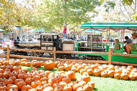 Tapia Brothers Pumpkin Patch by Where To Find Pumpkin Patches Corn Mazes Hayrides And More In