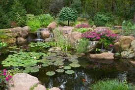 Water Garden & Pond Lifestyle Specialists-Atlanta|Fulton|Gwinnett ... Pond Installationmaintenance Ctracratlantafultongwinnett Supplies Installation Maintenance Centerpa Lancaster Nashville Area Coctorbrentwoodtnfranklin Check Out This Amazing Certified Aquascape Contractor Water Buildercontractor Doylestown Bucks Countypa Fish Koi Coctorcentral Palebanonharrisburg Science Contractors Outdoor Living Lifestyleann Arborwashtenawmichiganmi Garden Lifestyle Specialistsatlantafultongwinnett