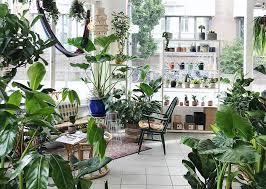 leben im urbanen dschungel zuhause bei the plant corner