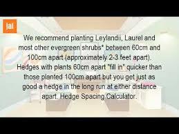 how far apart do you plant a hedge