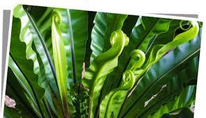 fleur et plante du lac des plantes vertes pour équilibrer intérieur fleurs