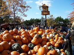 Bengtson Pumpkin Farm Chicago by 11 Smashing Good Pumpkin Patches Mnn Mother Nature Network