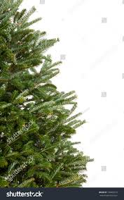Balsam Christmas Trees Real by Closeup Part Real Evergreen Christmas Tree Stock Photo 156065513