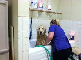 vca sinking spring animal hospital 15 photos veterinarians