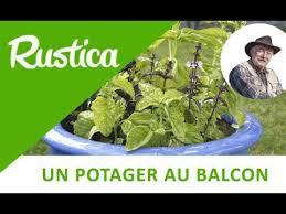 la culture du basilic en pot