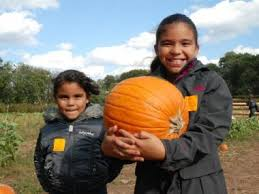Pumpkin Picking Nj Near Staten Island by The City Slicker U0027s Guide To Pumpkin Picking Manhattan New York