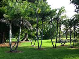Montgomery Botanic Center – Miami FL