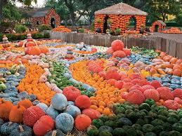 Burts Pumpkin Farm 2015 by The South U0027s Best Pumpkin Patches Southern Living