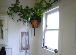 Best Plants For Bathroom No Light by 16 Best Home Work Report Shower Plants Images On Pinterest