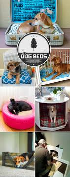 Best 25+ Best Dog Beds Ideas On Pinterest | Dog Beds On Sale ... Cloud Nine Dog Traing Best Houses In 2017 For Both Indoor And Outdoor Use Siberian Husky Costs Facts Infographic Ultimate Guide Farmer Tag Wallpapers Country Children Tractor Fields Farm Dogs Plastic Dog Barnhome Kennel Petshop Online 25 Food Bowls Ideas On Pinterest Project Food Cindee X Stackhouse Owyheestar Weimaraners News 614 Best Australian Cattle Images Blue Heelers 5 Facts About Dogs Deworming The Horse Owners Resource Lonely Escapes Yard To Get A Hug From His Friend Youtube Oakwood Park Morton6711