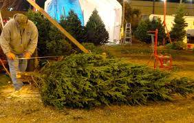Making Christmas Tree Preservative by 100 Making Christmas Tree Preservative Prettiest Christmas
