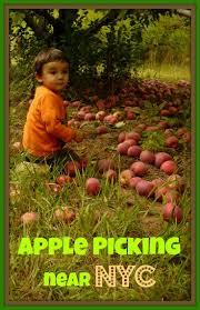 Pumpkin Patch Nj Chester by 8 Best Top 8 Pumpkin Picking Farms For Families In New Jersey
