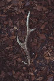 Shed Hunting Southern Utah by 24 Best The Best Shed Hunting Videos Out There Images On
