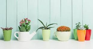 8 zimmerpflanzen für positive energie freundin de