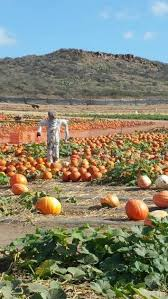 Pumpkin Patch Irvine University by Orange County U0027s 5 Best Pumpkin Patches To Find Your Perfect Jack O