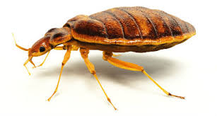 10 Myths About Bed Bugs Property Managers Need to Know