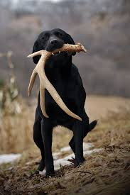 shed hunting dogs a couple that hunts together stays together
