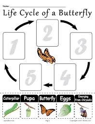 Life Cycle Of A Pumpkin Seed Worksheet by Life Cycle Of A Butterfly