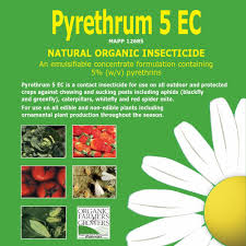 Christmas Tree Aphids Uk by Agropharm Ltd Pyrethrum 5ec Natural Organic Insect Pest Spray