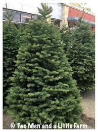 Plantable Christmas Trees Nj by Christmas Replanting Christmas Trees Awesome Image Inspirations