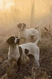 To Have Your Dog Trained Bird Hunt Contact George Hitckox Also Sells Hunting Dogs And Has A Training School