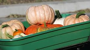 Pumpkin Patch Near Chandler Az by Chino Valley Pumpkin Patch Blames Town For Closure Arizona U0027s Family