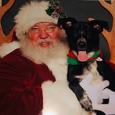 Amazoncom Namsan Pet Christmas Costumes Cat Dog Santa Cap