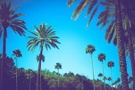 Amazing California Disney Dream Florida Hot Palm Tree Summer