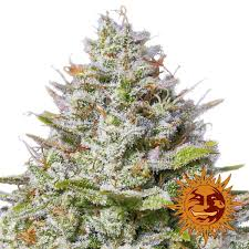NUG Premium Jack Flower GreenRush Buy Weed Online