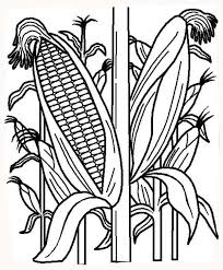 Healthy Corn Plant Colouring Page