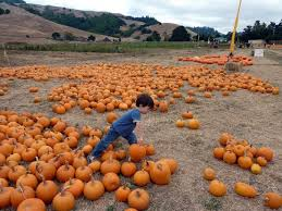 Half Moon Bay Pumpkin Patches 2015 by Best Pumpkin Patches And Farms In The San Francisco Bay Area