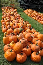 Sauvies Island Pumpkin Patch Groupon by 25 Best Pumpkin Patch Locations Ideas On Pinterest Pumpkin