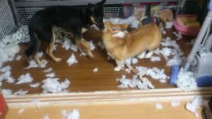 am駭ager un petit bureau スタッフのブログ ことに動物病院 札幌市西区の動物病院犬 猫