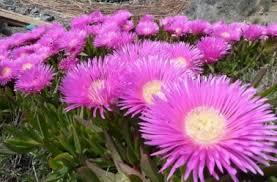 entretien plante grasse d interieur plantes grasses définition espèces représentatives et entretien
