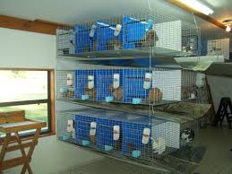 Our Rabbitry - R & R Bunny Barn Learn How To Build A Rabbit Hutch With Easy Follow Itructions Plans For Building Cages Hutches Other Housing Down On 152 Best Rabbits Images Pinterest Meat Rabbits Rabbit And 106 Barn 341 Bunnies Pet House Our Outdoor Housing Story Habitats Tails Hutch Hutches At Cage Source Best 25 Shed Ideas Bunny Sheds Shed Amazoncom Petsfit 425 X 30 46 Inches Cages Exterior Cstruction Nearly Complete Resultado De Imagem Para Plans Row Barn Planos Celeiro