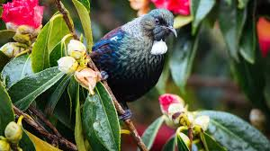 Good Plants For Bathrooms Nz by Attract Birds To Your Garden Home And Garden