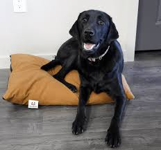 Tempur Pedic Dog Bed by Nest Spotbeds Pet Bed Review Sleepopolis