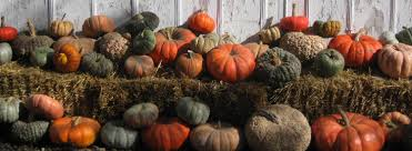 Oklahoma Pumpkin Patch Directory by Home Callahan Creek Pumpkins