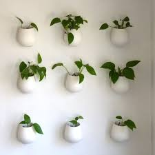 Plants In Bathrooms Ideas by Best Plants For A Bathroom Environment Bathroom City