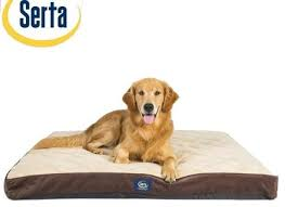 Serta Dog Beds by Serta Dog Bed In Modern Austin With Bed Design Next To Kids Room