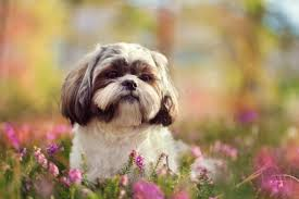 small hypoallergenic dogs petlife