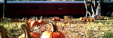 Pumpkin Patch Indiana County Pa by The Great Pumpkin Train