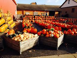 Southern Ohio Pumpkin Patches 9 best pumpkin patches in cleveland in 2017