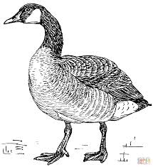 Flock Of Canada Geese Coloring Page