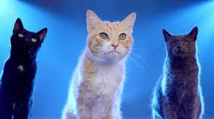 honda cat for honda cat