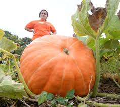 Pumpkin Patch Denver Pa by Lancaster County Pumpkin Crops Are Prime For The Picking Local
