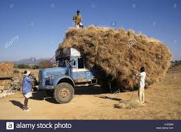 Men Rearranging Load Of Hay Falling Off Of Old Truck, Rural India ... Free Photo Old Truck Transport Download Jooinn Some Trucks Will Never Be More Than A Beat Up Old Work Truck That India Stock Photos Images Alamy Rusty In Field Photo Mwlucey 1943046 Trucks Tom The Backroads Traveller Decaying Damaged Image Of Decay Stock Montana Pickup 1946 Pinterest Classic Commercial Vehicles Bus Etc Thread Page 49 Emw Electric Motor Works Bakersfield Ca Junk Yard Wallpaper And Background